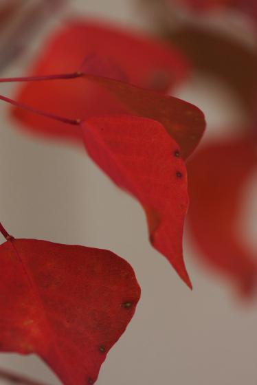 2008.11.4_30.jpg