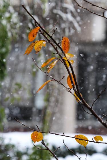 2008.12.5_9.jpg