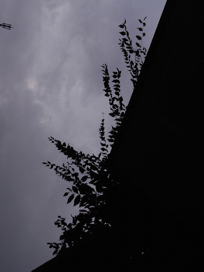 brg-2008.10.24_1.jpg