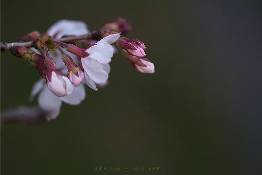 s-SE2016-03-24.jpg